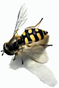 one-bee